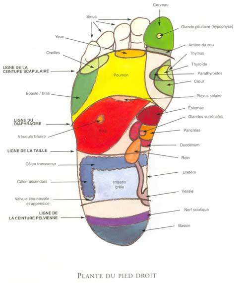 Le thai foot massage c est le pied petit carnet d 39 asie for Douleur interieur pied gauche
